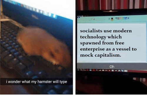 Dank Memes: i wonder what my hamster will type  socialists use modern  technology which  spawned from free  enterprise as a vessel to  mock capitalism  Oh