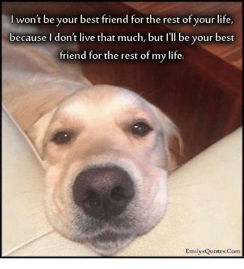 SIZZLE: I won't be your best friend for the rest of your life,  because I don't live that much, but I'll be your best  triend for the rest of my lite  EmilysQuotes.Com