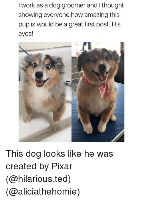 Groomers: I work as a dog groomer and I thought  showing everyone how amazing this  pup is would be a great first post. His  eyes! This dog looks like he was created by Pixar (@hilarious.ted) (@aliciathehomie)