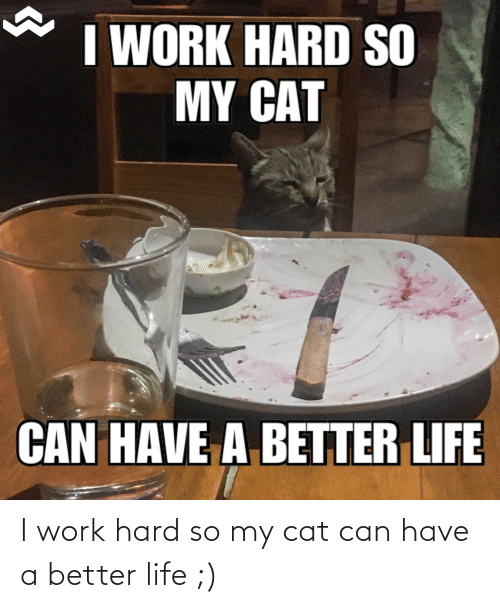 better life: I work hard so my cat can have a better life ;)