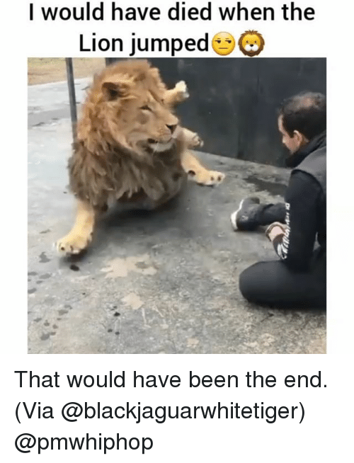 Memes, Lion, and Jumped: I would have died when the  Lion jumped That would have been the end. (Via @blackjaguarwhitetiger) @pmwhiphop