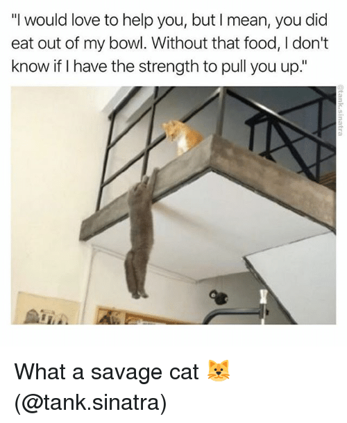 """Food, Love, and Memes: """"I would love to help you, but I mean, you did  eat out of my bowl. Without that food, I don't  know if I have the strength to pull you up."""" What a savage cat 🐱 (@tank.sinatra)"""