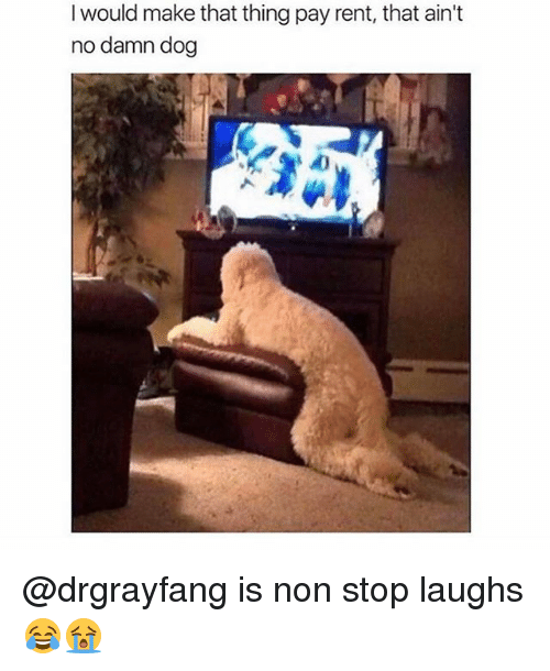 Memes, 🤖, and Dog: I would make that thing pay rent, that ain't  no damn dog @drgrayfang is non stop laughs 😂😭