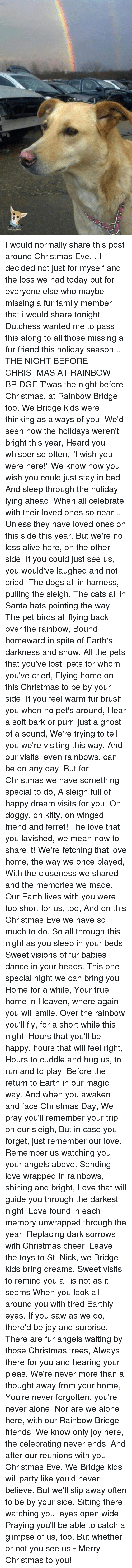 """i wish you were here: I would normally share this post around Christmas Eve... I decided not just for myself and the loss we had today but for everyone else who maybe missing a fur family member that i would share tonight   Dutchess wanted me to pass this along to all those missing a fur friend this holiday season...   THE NIGHT BEFORE CHRISTMAS  AT RAINBOW BRIDGE   T'was the night before Christmas, at Rainbow Bridge too.  We Bridge kids were thinking as always of you.  We'd seen how the holidays weren't bright this year,  Heard you whisper so often, """"I wish you were here!""""   We know how you wish you could just stay in bed  And sleep through the holiday lying ahead,  When all celebrate with their loved ones so near...  Unless they have loved ones on this side this year.   But we're no less alive here, on the other side.  If you could just see us, you would've laughed and not cried.  The dogs all in harness, pulling the sleigh.  The cats all in Santa hats pointing the way.   The pet birds all flying back over the rainbow,  Bound homeward in spite of Earth's darkness and snow.  All the pets that you've lost, pets for whom you've cried,  Flying home on this Christmas to be by your side.   If you feel warm fur brush you when no pet's around,  Hear a soft bark or purr, just a ghost of a sound,  We're trying to tell you we're visiting this way,  And our visits, even rainbows, can be on any day.   But for Christmas we have something special to do,  A sleigh full of happy dream visits for you.  On doggy, on kitty, on winged friend and ferret!  The love that you lavished, we mean now to share it!   We're fetching that love home, the way we once played,  With the closeness we shared and the memories we made.  Our Earth lives with you were too short for us, too,  And on this Christmas Eve we have so much to do.   So all through this night as you sleep in your beds,  Sweet visions of fur babies dance in your heads.  This one special night we can bring you Home for a while,  You"""