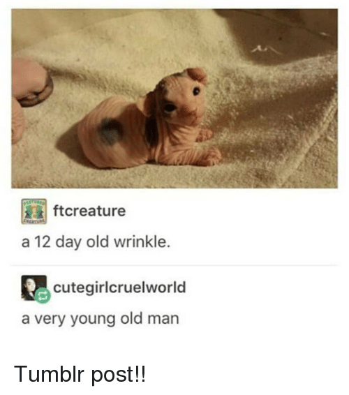 tumblr post: ial ftcreature  a 12 day old wrinkle.  cutegirlcruelworld  a very young old man Tumblr post!!