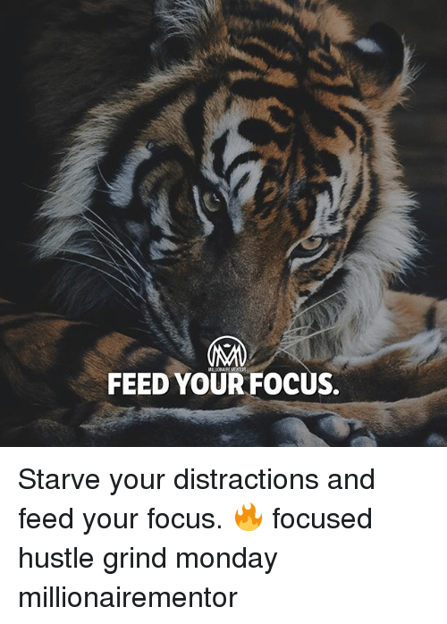 Memes, Focus, and Monday: IAM  FEED YOUR FOCUS. Starve your distractions and feed your focus. 🔥 focused hustle grind monday millionairementor