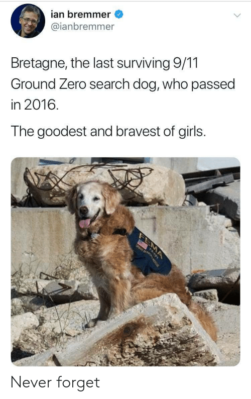 surviving: ian bremmer  @ianbremmer  Bretagne, the last surviving 9/11  Ground Zero search dog, who passed  in 2016.  The goodest and bravest of girls.  MA Never forget