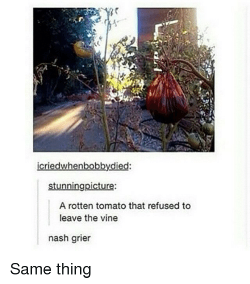 rotten tomato: icriedwhenbobby.died:  stunningpicture:  A rotten tomato that refused to  leave the vine  nash grier Same thing