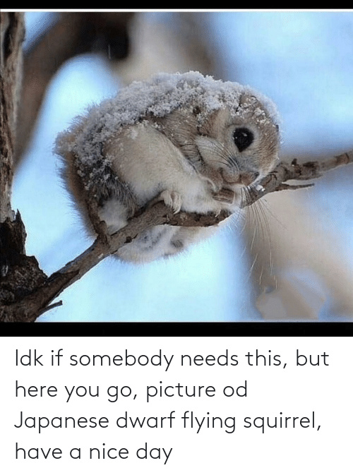Squirrel: Idk if somebody needs this, but here you go, picture od Japanese dwarf flying squirrel, have a nice day