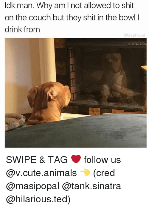 Animals, Cute, and Cute Animals: Idk man. Why am I not allowed to shit  on the couch but they shit in the bowl l  drink from  @Masi Popa SWIPE & TAG ❤️ follow us @v.cute.animals 👈 (cred @masipopal @tank.sinatra @hilarious.ted)
