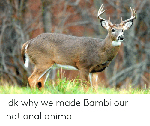 Bambi: idk why we made Bambi our national animal