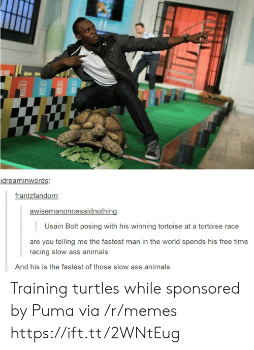 bolt: idreaminwords:  frantzfandom  awisemanoncesaidnothing:  Usain Bolt posing with his winning tortoise at a tortoise race  are you telling me the fastest man in the world spends his free time  racing slow ass animals  And his is the fastest of those slow ass animals Training turtles while sponsored by Puma via /r/memes https://ift.tt/2WNtEug