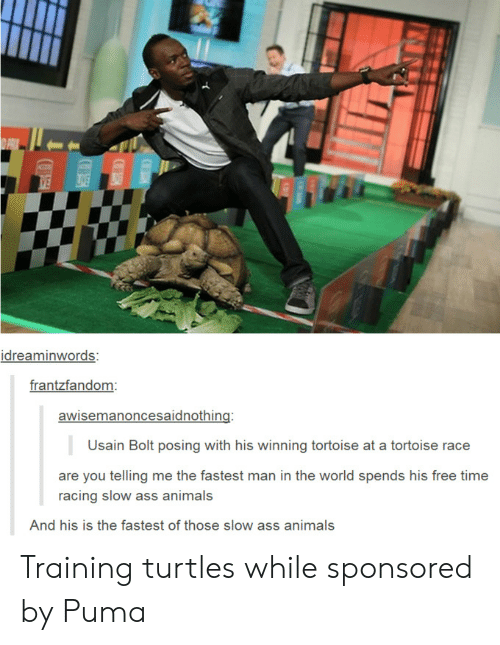 bolt: idreaminwords:  frantzfandom  awisemanoncesaidnothing:  Usain Bolt posing with his winning tortoise at a tortoise race  are you telling me the fastest man in the world spends his free time  racing slow ass animals  And his is the fastest of those slow ass animals Training turtles while sponsored by Puma