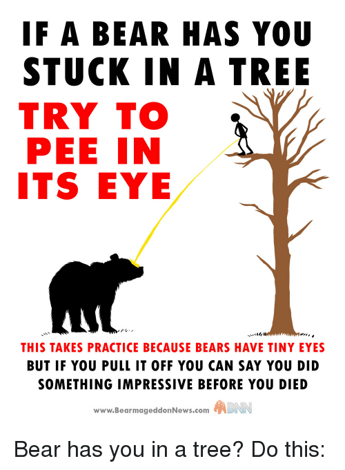Funny, Bear, and Bears: IF A BEAR HAS YOU  STUCK IN A TREE  TRY TO  PEE IN  ITS EYE  THIS TAKES PRACTICE BECAUSE BEARS HAVE TINY EYES  BUT IF YOU PULL IT OFF YOU CAN SAY YOU DID  SOMETHING IMPRESSIVE BEFORE YOU DIED  www.BearmageddonNews.com  ABNN Bear has you in a tree? Do this: