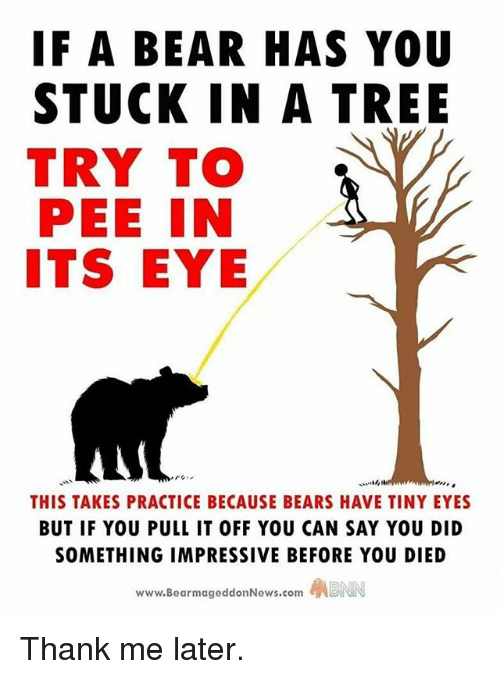 Memes, Bear, and Bears: IF A BEAR HAS YOU  STUCK IN A TREE  TRY TO  PEE IN  ITS EYE  THIS TAKES PRACTICE BECAUSE BEARS HAVE TINY EYES  BUT IF YOU PULL IT OFF YOU CAN SAY YOU DID  SOMETHING IMPRESSIVE BEFORE YOU DIED  www.BearmageddonNews.com ABNN Thank me later.