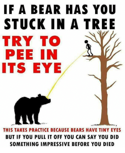 Bear, Bears, and Tree: IF A BEAR HAS YOU  STUCK IN A TREE  TRY TO  PEE IN  ITS EYE  THIS TAKES PRACTICE BECAUSE BEARS HAVE TINY EYES  BUT IF YOU PULL IT OFF YOU CAN SAY YOU DID  SOMETHING IMPRESSIVE BEFORE YOU DIED