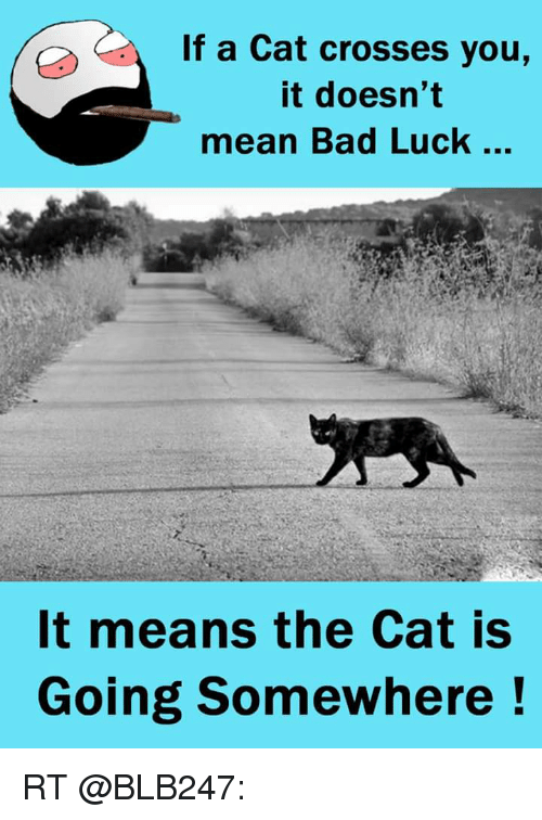 cats do not cause bad luck Black cats are supposedly bad luck because witches were supposed to own them people have also thought that black cats were an omen, bad things would personally, bad luck is black cats because there is a myth that once there was on black cat that the queen of england loved so much, but then.