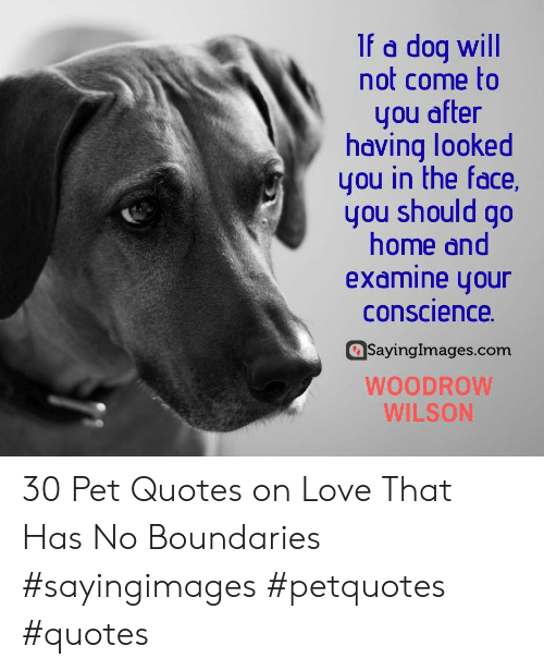 Conscience: If a dog will  not come to  you after  having looked  you in the face,  you should go  home and  examine your  conscience  SayingImages.com  WOODROW  WILSON 30 Pet Quotes on Love That Has No Boundaries #sayingimages #petquotes #quotes