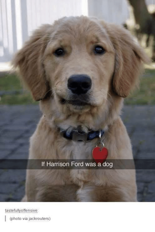 Offensives: If Harrison Ford was a dog  tastefully offensive  I (photo via jackrouters)
