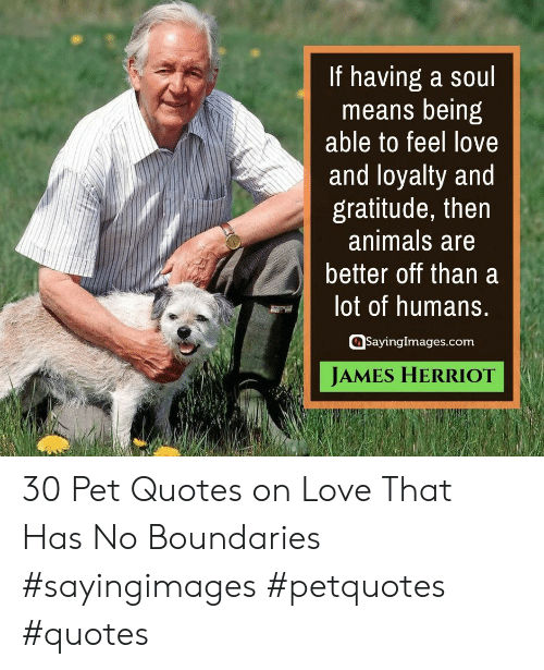 gratitude: If having a soul  means being  able to feel love  and loyalty and  gratitude, then  animals are  better off than a  lot of humans.  SayingImages.com  JAMES HERRIOT 30 Pet Quotes on Love That Has No Boundaries #sayingimages #petquotes #quotes