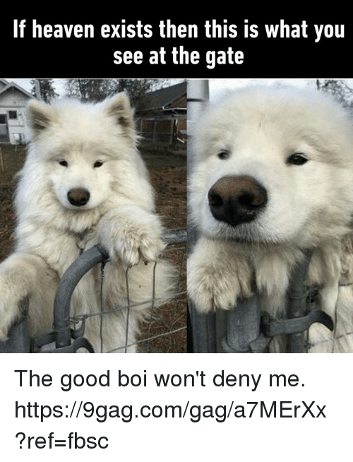 9gag, Dank, and Heaven: If heaven exists then this is what you  see at the gate The good boi won't deny me. https://9gag.com/gag/a7MErXx?ref=fbsc