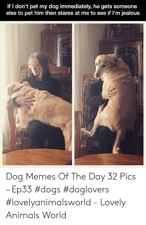 Im Jealous: If I don't pet my dog immediately, he gets someone  else to pet him then stares at me to see if I'm jealous Dog Memes Of The Day 32 Pics – Ep33 #dogs #doglovers #lovelyanimalsworld - Lovely Animals World