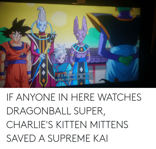 dragonball super: If I had mot placed that  kitten mitten on his hand. IF ANYONE IN HERE WATCHES DRAGONBALL SUPER, CHARLIE'S KITTEN MITTENS SAVED A SUPREME KAI