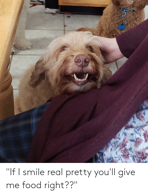 """i smile: """"If I smile real pretty you'll give me food right??"""""""