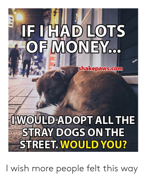 stray dogs: IF IHAD LOTS  OF MONEY..  shakepaws.co  IWOULD ADOPT ALL THE  STRAY DOGS ON THE  STREET. WOULD YOU? I wish more people felt this way