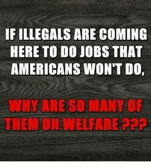 Memes, Jobs, and 🤖: IF ILLEGALS ARE COMING  HERE TO DO JOBS THAT  AMERICANS WON'T DO  WHY ARE SO ANY OF  THENFON WELFARE PPPp