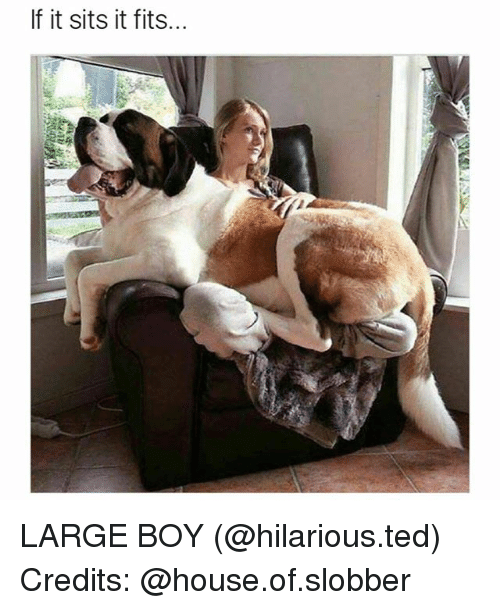Funny, Ted, and House: If it sits it fits... LARGE BOY (@hilarious.ted) Credits: @house.of.slobber