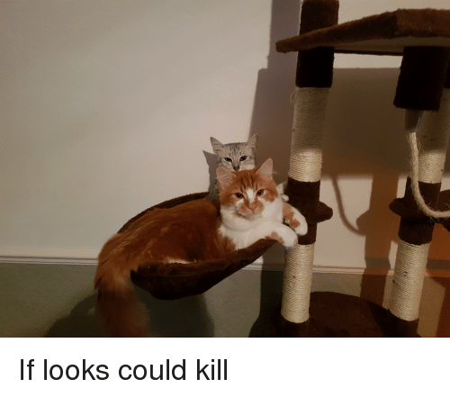If Looks Could Kill