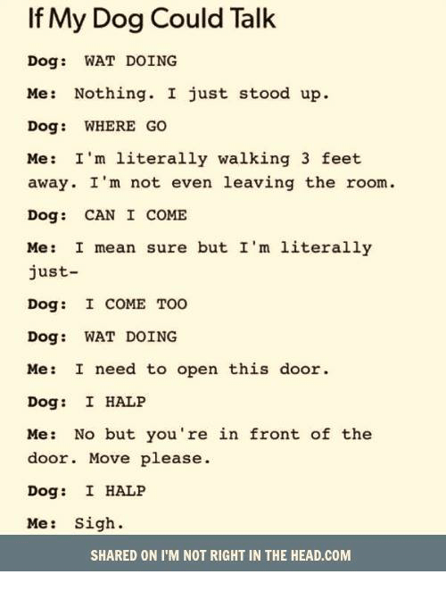 talking dogs: If My Dog Could Talk  Dog WAT DOING  Me: Nothing. I just stood up.  Dog: WHERE GO  Me: I'm literally walking 3 feet  away. I'm not even leaving the room.  Dog CAN I COME  Me: I mean sure but I'm literally  just  Dog:  I COME TOO  Dog: WAT DOING  Me: I need to open this door  Dog:  I HALP  Me: No but you're in front of the  door. Move please  Dog: I HALP  Me  Sigh  SHARED ON I'M NOT RIGHT IN THE HEAD.COM