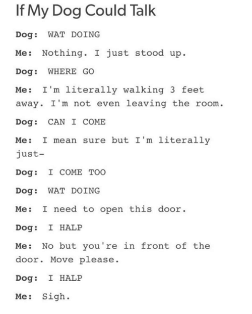 talking dogs: If My Dog Could Talk  Dog  WAT DOING  Me: Nothing  I just stood up  Dog WHERE GO  Me: I'm literally walking 3 feet  away. I'm not even leaving the room  Dog CAN I COME  Me: I mean sure but I'm literally  just  Dog: I COME TOO  Dog WAT DOING  Me I need to open this door  Dog: I HALP  Me  No but you're in front of the  door. Move please  Dog: I HALP  Me Sigh