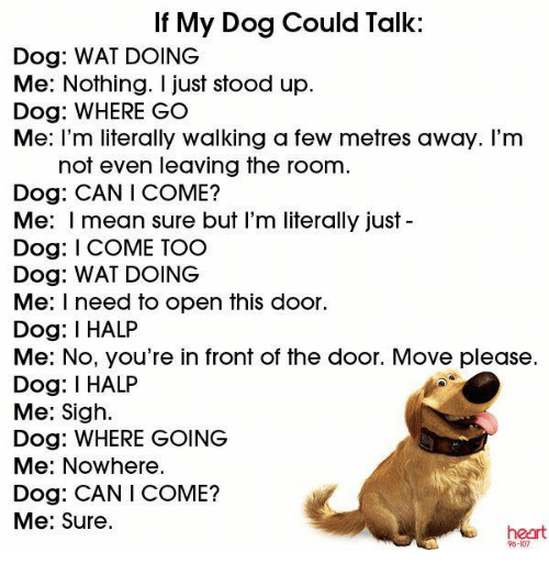talking dogs: If My Dog Could Talk:  Dog: WAT DOING  Me: Nothing. I just stood up.  Dog: WHERE GO  Me: I'm literally walking a few metres away. I'm  not even leaving the room  Dog: CAN COME?  Me: mean sure but I'm literally just  Dog: I COME TOO  Dog: WAT DOING  Me: I need to open this door.  Dog: I HALP  Me: No, you're in front of the door. Move please  Dog: I HALP  Me: Sigh.  Dog: WHERE GOING  Me: Nowhere.  Dog: CAN I COME?  Me: Sure.  heart
