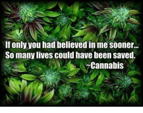 Cannabis: If only you had believed in me Sooner...  So many lives could have been saved.  Cannabis