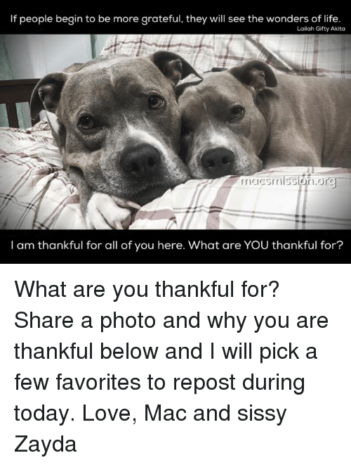 akita: If people begin to be more grateful, they will see the wonders of life.  Lailah Gifty Akita  on  I am thankful for all of you here. What are YOU thankful for? What are you thankful for? Share a photo and why you are thankful below and I will pick a few favorites to repost during today.   Love, Mac and sissy Zayda