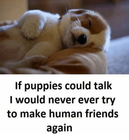 Friends, Memes, and Puppies: If puppies could talk  I would never ever try  to make human friends  again