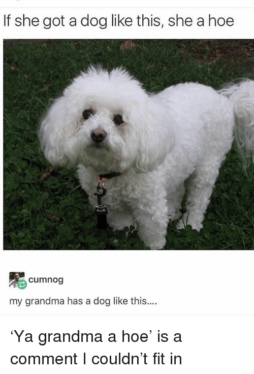 Grandma, Hoe, and Ironic: If she got a dog like this, she a hoe  cumnog  my grandma has a dog like this.. 'Ya grandma a hoe' is a comment I couldn't fit in