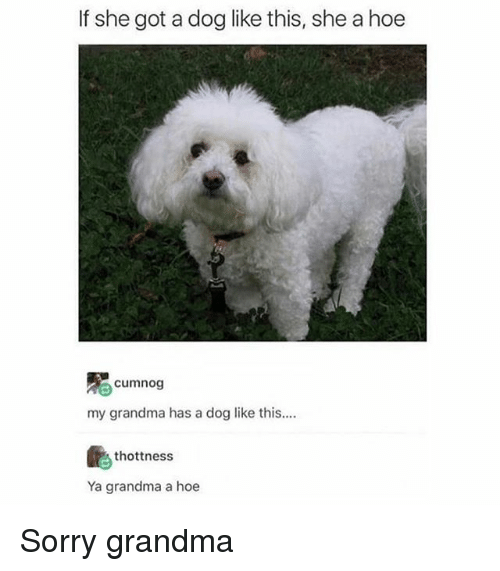 Grandma, Hoe, and Memes: If she got a dog like this, she a hoe  cumnog  my grandma has a dog like this....  thottness  Ya grandma a hoe Sorry grandma