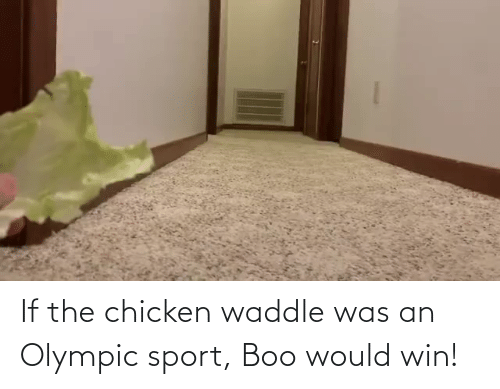 boo: If the chicken waddle was an Olympic sport, Boo would win!