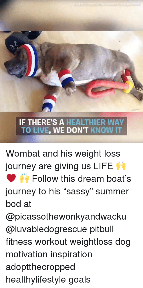 """wombat: IF THERE'S A HEALTHIER WAY  TO LIVE, WE DON'T KNOW IT Wombat and his weight loss journey are giving us LIFE 🙌 ❤️ 🙌 Follow this dream boat's journey to his """"sassy"""" summer bod at @picassothewonkyandwacku @luvabledogrescue pitbull fitness workout weightloss dog motivation inspiration adoptthecropped healthylifestyle goals"""