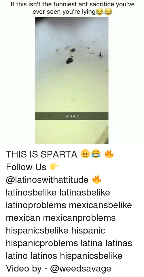 Latinos, Memes, and Video: If this isn't the funniest ant sacrifice you've  ever seen you're lying  WHAT THIS IS SPARTA 😠😂 🔥 Follow Us 👉 @latinoswithattitude 🔥 latinosbelike latinasbelike latinoproblems mexicansbelike mexican mexicanproblems hispanicsbelike hispanic hispanicproblems latina latinas latino latinos hispanicsbelike Video by - @weedsavage