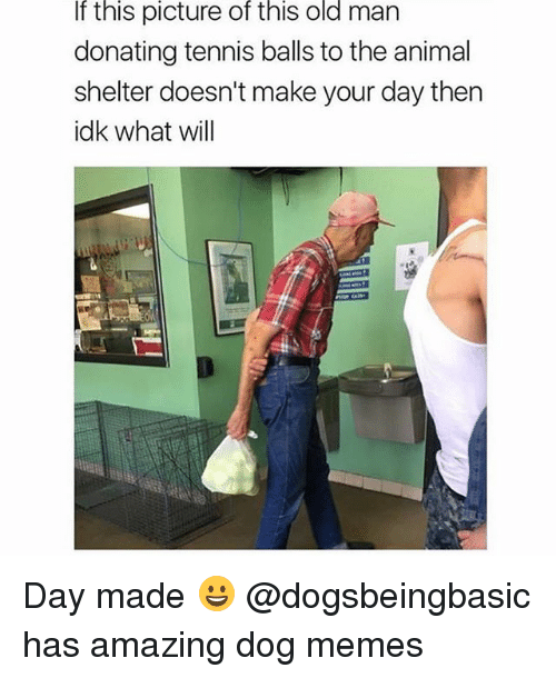 dogged: If this picture of this old man  donating tennis balls to the animal  shelter doesn't make your day then  idk what will Day made 😀 @dogsbeingbasic has amazing dog memes