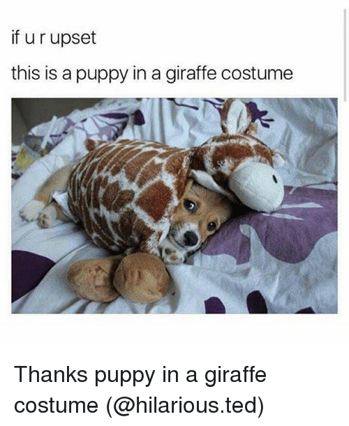 Memes, Ted, and Giraffe: if u r upset  this is a puppy in a giraffe costume  ん金 Thanks puppy in a giraffe costume (@hilarious.ted)