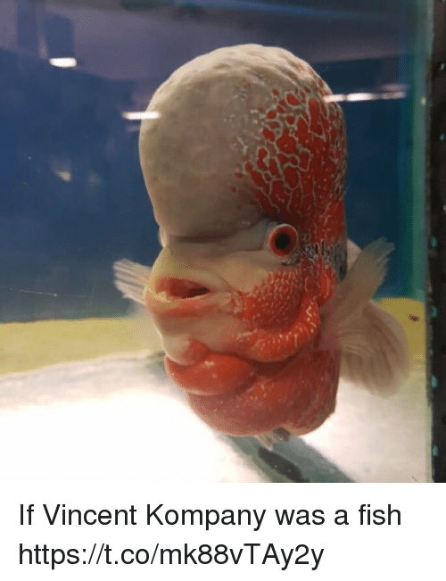 Memes, Fish, and 🤖: If Vincent Kompany was a fish https://t.co/mk88vTAy2y