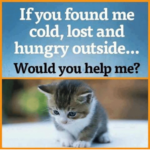 Cold: If vou found me  cold, lost and  hungry outside...  Would you help me?