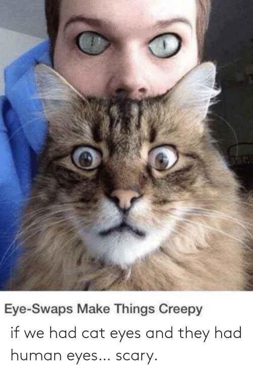 scary: if we had cat eyes and they had human eyes… scary.