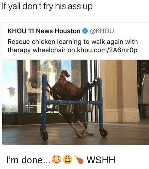 Ass, Memes, and News: If yall don't fry his ass up  KHOU 11 News Houston @KHOU  Rescue chicken learning to walk again with  therapy wheelchair on.khou.com/2A6mrO I'm done...😳😩🍗 WSHH