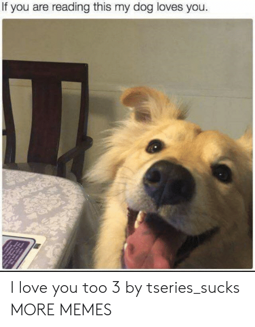 love you too: If you are reading this my dog loves you. I love you too 3 by tseries_sucks MORE MEMES